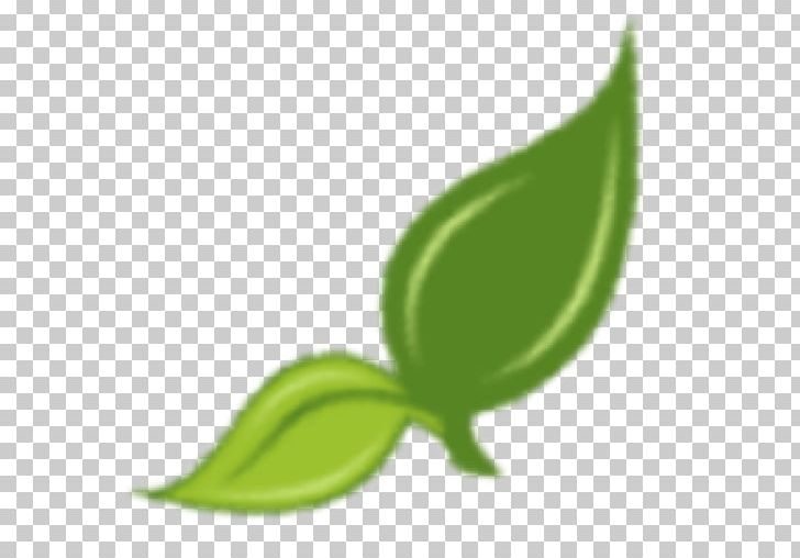 Hillbilly Tomato Herb Seed Leaf Garden PNG, Clipart