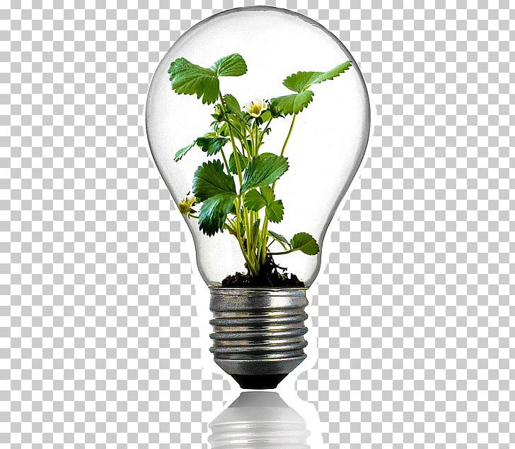 Grow Light Incandescent Light Bulb Plant Full Spectrum Light Png