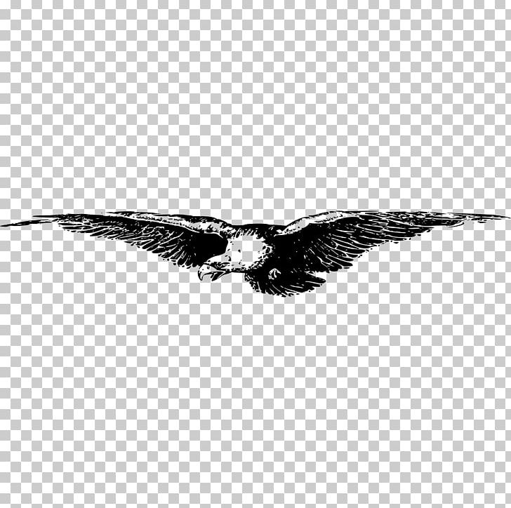 YouTube AutoCAD DXF Encapsulated PostScript PNG, Clipart, Accipitriformes, Animals, Autocad Dxf, Bald Eagle, Beak Free PNG Download