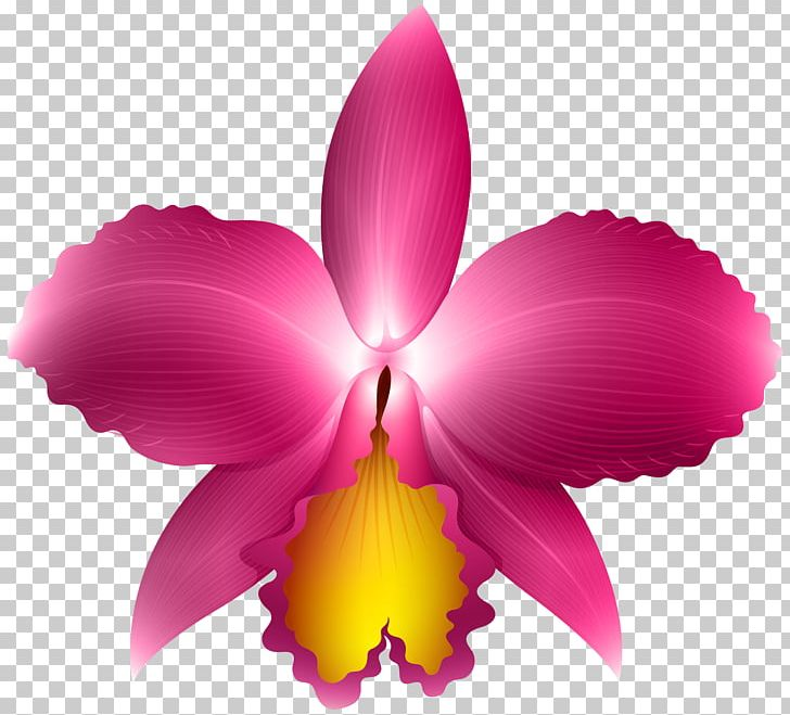 Orchid Png Clipart Art Blog Cattleya Cattleya Orchids Clip Art Free Png Download