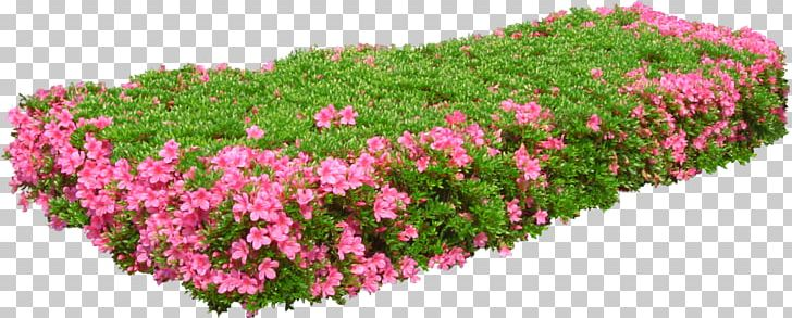 Flower Garden PNG, Clipart, Annual Plant, Digital Image