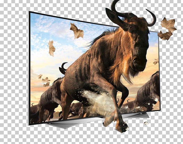 Ultra-high-definition Television 4K Resolution LED-backlit