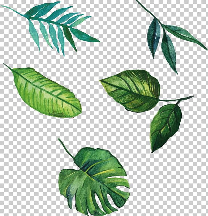 Leaf Euclidean PNG, Clipart, Banana Leaves, Branch, Cactaceae, Color, Decorative Patterns Free PNG Download