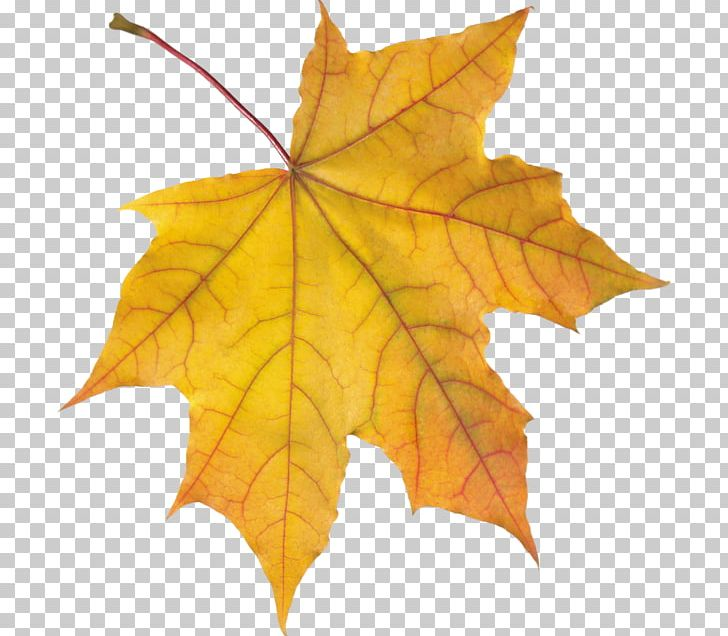 Autumn Leaf Color Orange PNG, Clipart, Autumn, Autumn Leaf Color, Autumn Leaves, Color, Fruit Nut Free PNG Download