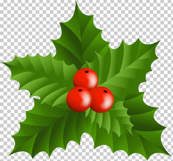 Christmas Holly Png.Christmas Holly Png Clipart Aquifoliaceae Aquifoliales