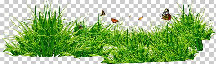Computer File PNG, Clipart, Commodity, Computer File, Flowerpot, Free, Grass Free PNG Download