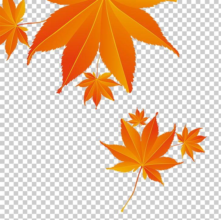 Maple Leaf Autumn PNG, Clipart, Adv, Autumn, Autumn Leaf, China Unicom, Critical Free PNG Download