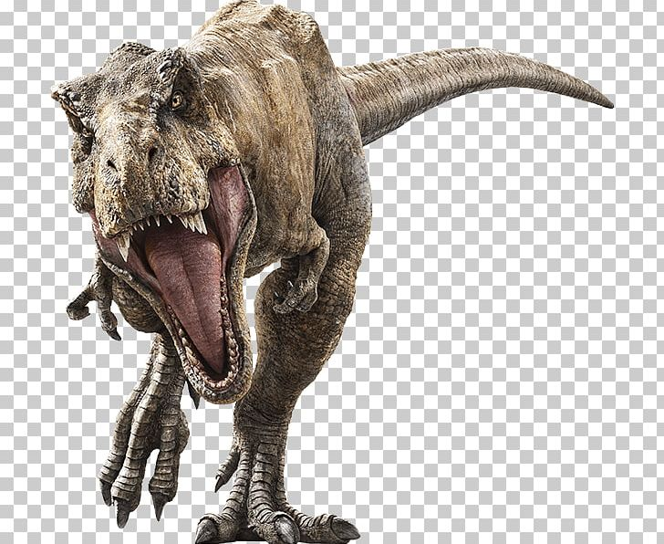 Tyrannosaurus Velociraptor Universal S Jurassic Park Baryonyx PNG, Clipart, Baryonyx, Dinosaur, Extinction, Fallen, Indominus Rex Free PNG Download