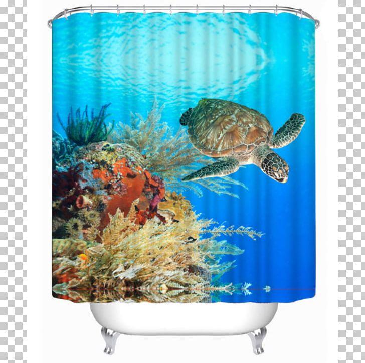 Sea Turtle Coral Reef PNG, Clipart, Animal, Animals, Aquarium, Coral, Coral Reef Free PNG Download