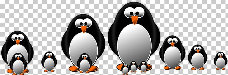 Little Penguin Graphics Drawing PNG, Clipart, Animal Figure, Animals, Art, Beak, Bird Free PNG Download