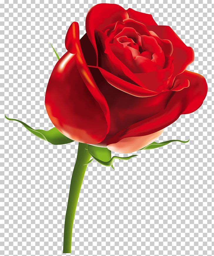 Rose Scalable Graphics Computer File PNG, Clipart, China Rose, Cut Flowers, Desktop Wallpaper, Download, Encapsulated Postscript Free PNG Download