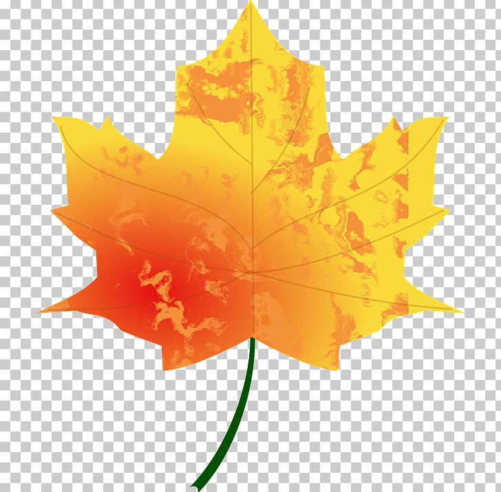 Autumn Leaf Color Look At Leaves PNG, Clipart, Autumn, Autumn Leaf, Autumn Leaf Color, Clip Art, Desktop Wallpaper Free PNG Download