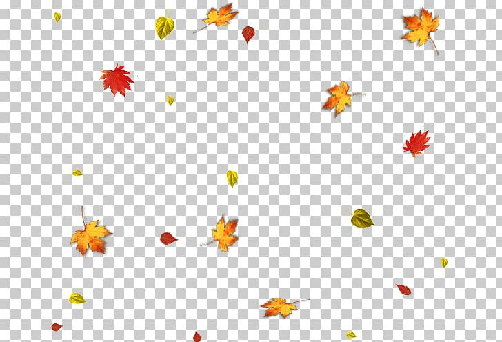Autumn Leaf PNG, Clipart, Akiba, Area, Autumn, Autumn Leaf, Autumn Leaves Free PNG Download