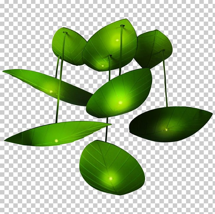 Light Amazon com Room Firefly Child PNG, Clipart, Animals