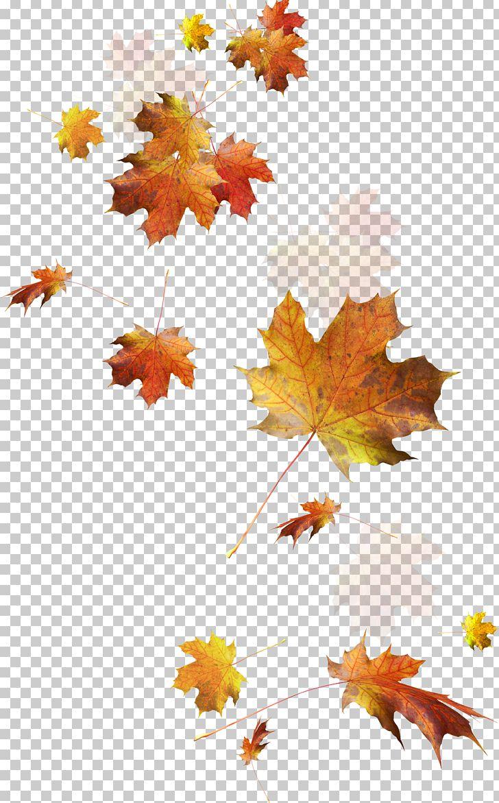 Autumn Leaves Autumn Leaf Color PNG, Clipart, Autumn, Autumn Leaf, Autumn Leaves, Capricia, Color Free PNG Download
