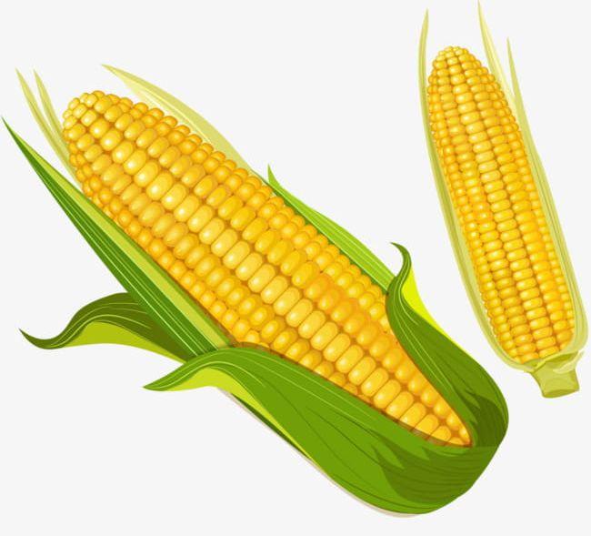 Corn PNG, Clipart, Baogu, Cartoon, Cartoon Corn, Corn, Corn Clipart Free  PNG Download