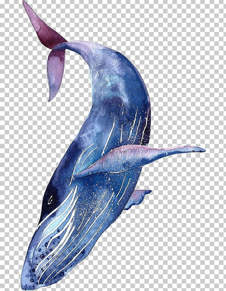 Whale Shark Tattoo Humpback Whale Blue Whale Png Clipart Animal