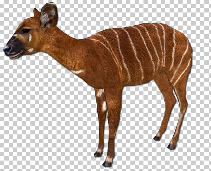 Sable Antelope Impala Zoo Tycoon 2 Animal PNG, Clipart