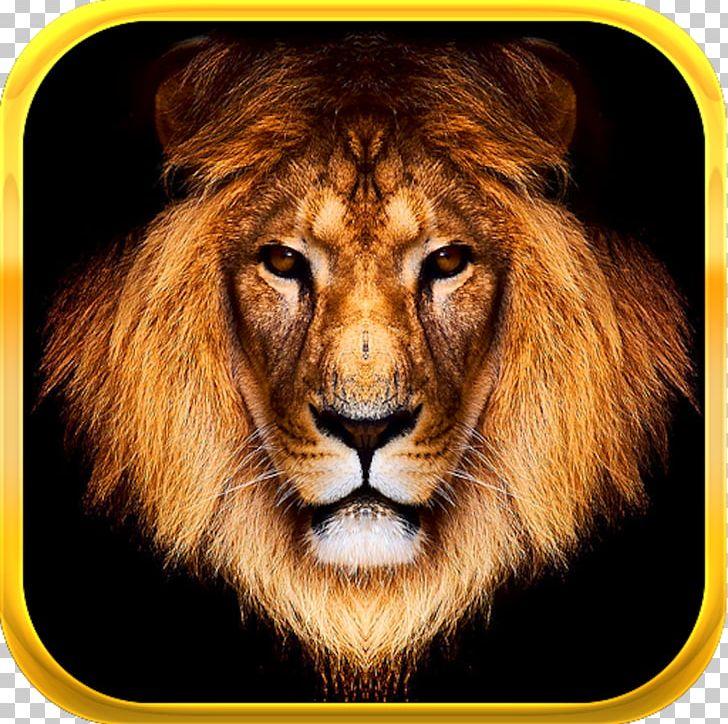 Lionhead Rabbit Felidae PNG, Clipart, Animal, Animals, Big Cats, Carnivoran, Cat Like Mammal Free PNG Download