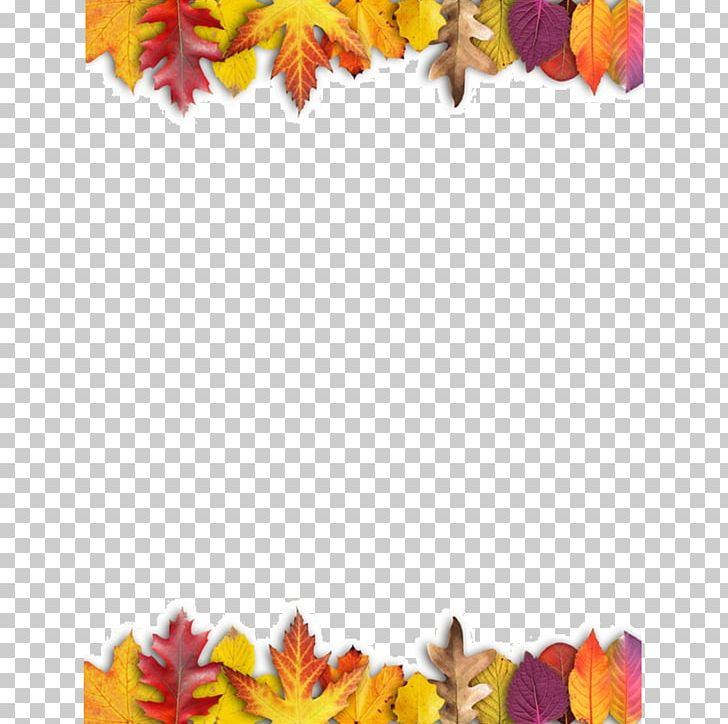 Ojo Travieso Maple Leaf Autumn Leaves PNG, Clipart, Autumn, Autumn Leaves, Chif, Color, Cut Flowers Free PNG Download