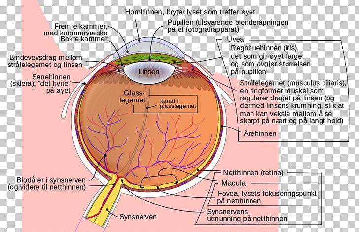 human eye xanthophyll diagram lutein png, clipart, angle, anterior segment  of eyeball, aqueous humour, area,