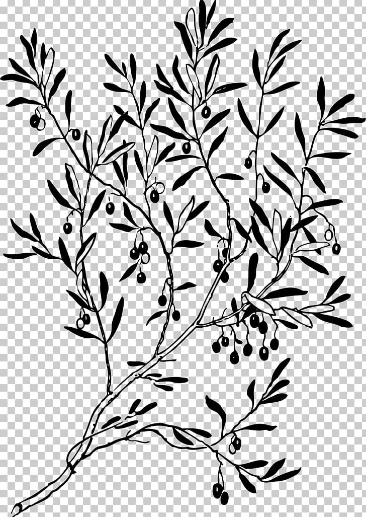 Olive Branch Laurel Wreath Png Clipart Art Black And White Branch Drawing Flora Free Png Download