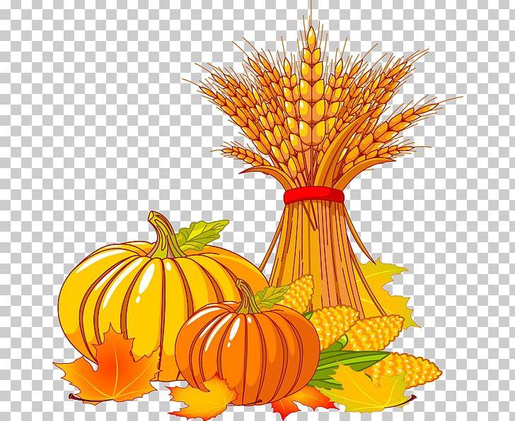 Autumn Leaf Color Free Content PNG, Clipart, Autumn, Autumn Leaf Color, Calabaza, Cartoon, Clip Art Free PNG Download