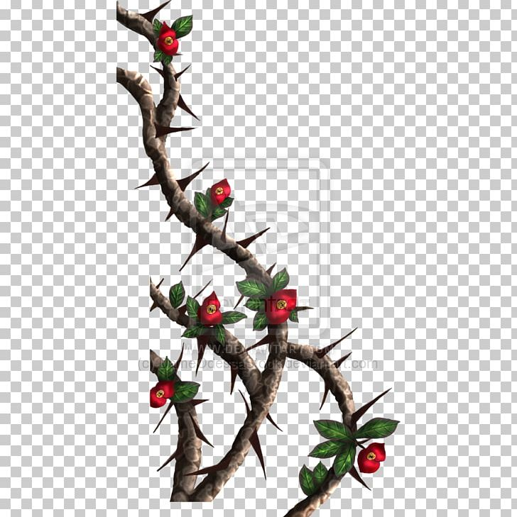 Thorns PNG, Clipart, Aquifoliaceae, Aquifoliales, Art, Blue Rose, Branch Free PNG Download