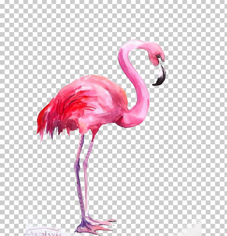 Flamingo watercolor. Painting png clipart animal