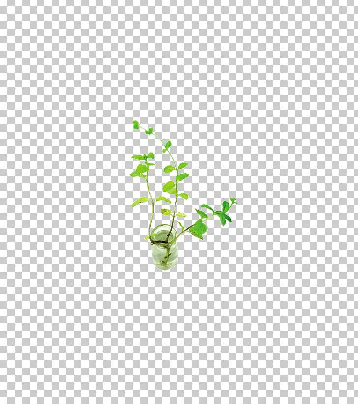 Mentha Spicata PNG, Clipart, Area, Computer Graphics, Computer Icons, Design, Download Free PNG Download