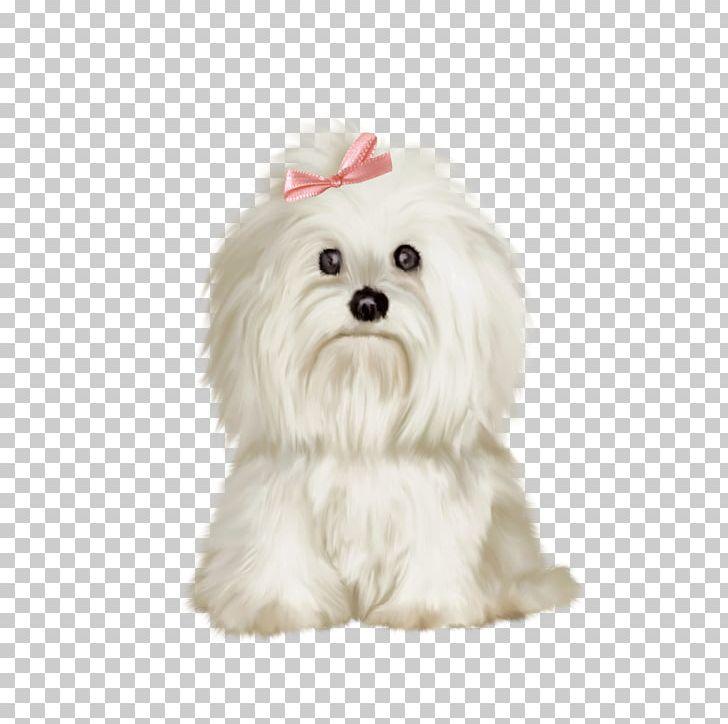 Maltese Dog Shih Tzu Bichon Frise West Highland White