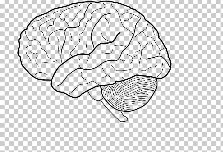 The Human Brain Coloring Book The Anatomy Coloring Book The Physiology Coloring  Book PNG, Clipart, Anatomy,