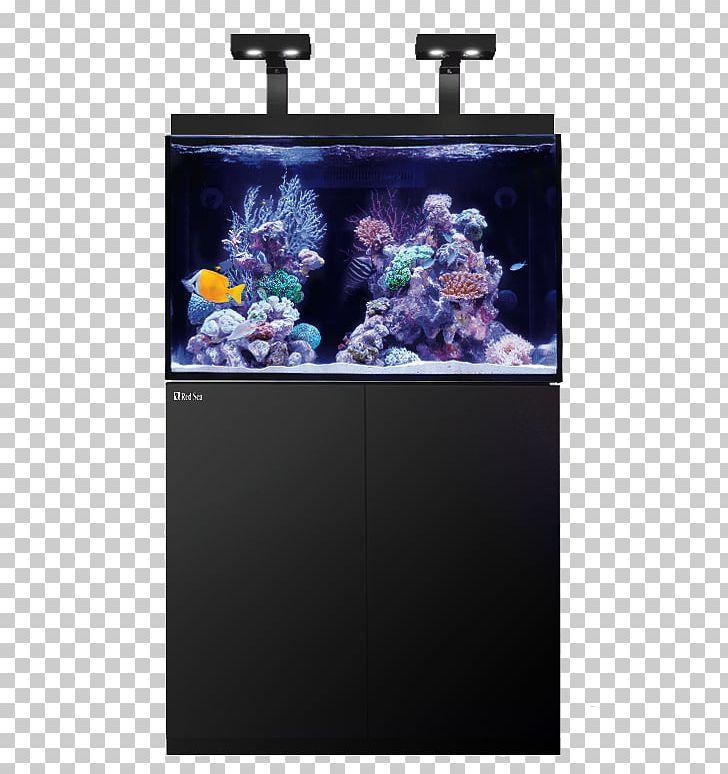 Red Sea Reef Aquarium Coral Reef PNG, Clipart, Aquarium, Aquarium Lighting, Aquariumlighting Of The Seawater, Aquariums, Aquatic Animal Free PNG Download