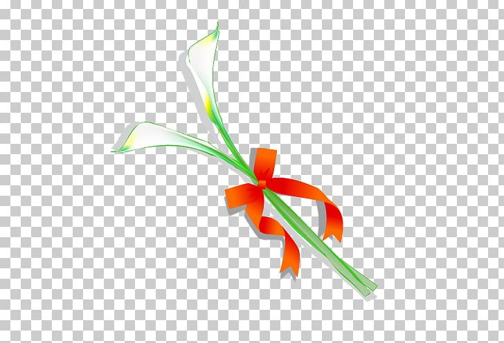 Graphic Design Carnation Drawing PNG, Clipart, Angle, Branch, Computer Wallpaper, Encapsulated Postscript, Flower Free PNG Download