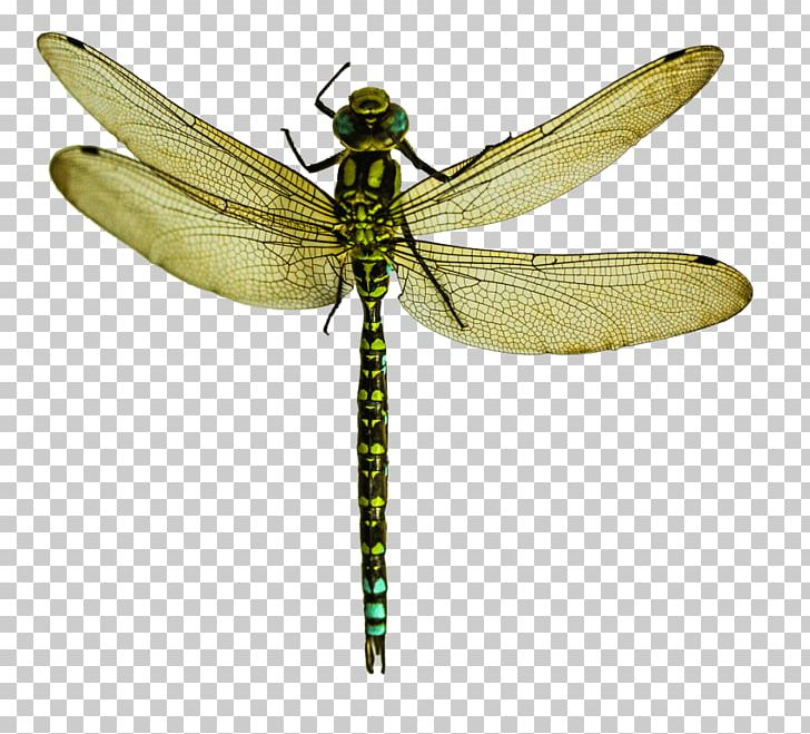 Insect Dragonfly Wings Portable Network Graphics
