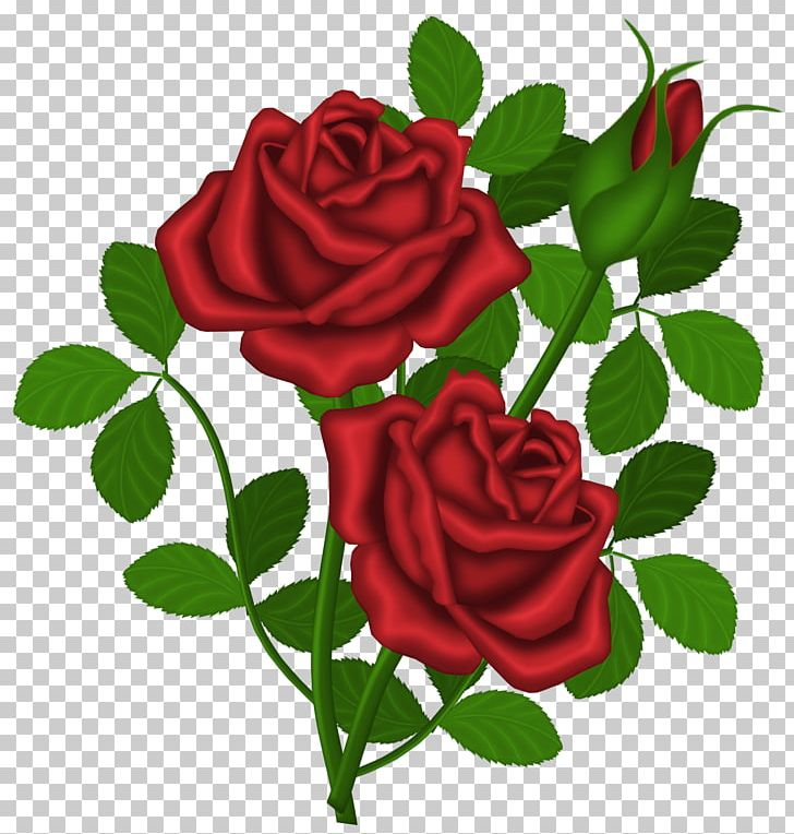 Rose Red PNG, Clipart, Blo, Cut Flowers, Design, Drawing, Flora Free PNG Download
