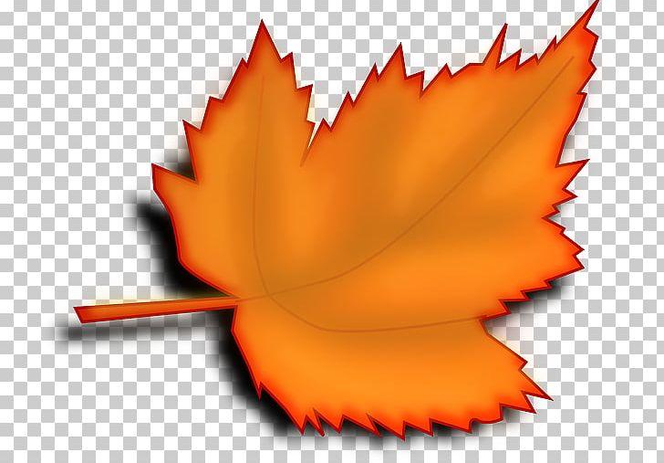 Autumn Leaf Color Desktop PNG, Clipart, Autumn, Autumn Leaf Color, Computer Icons, Desktop Wallpaper, Flower Free PNG Download