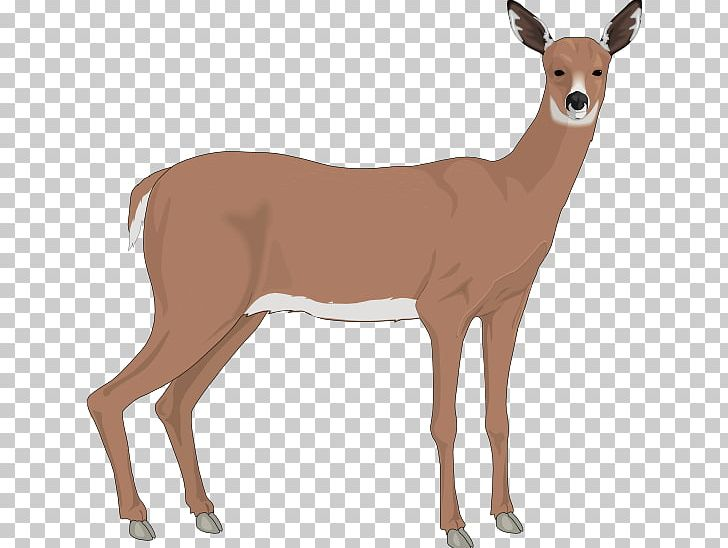 Deer realistic. The white tailed reindeer