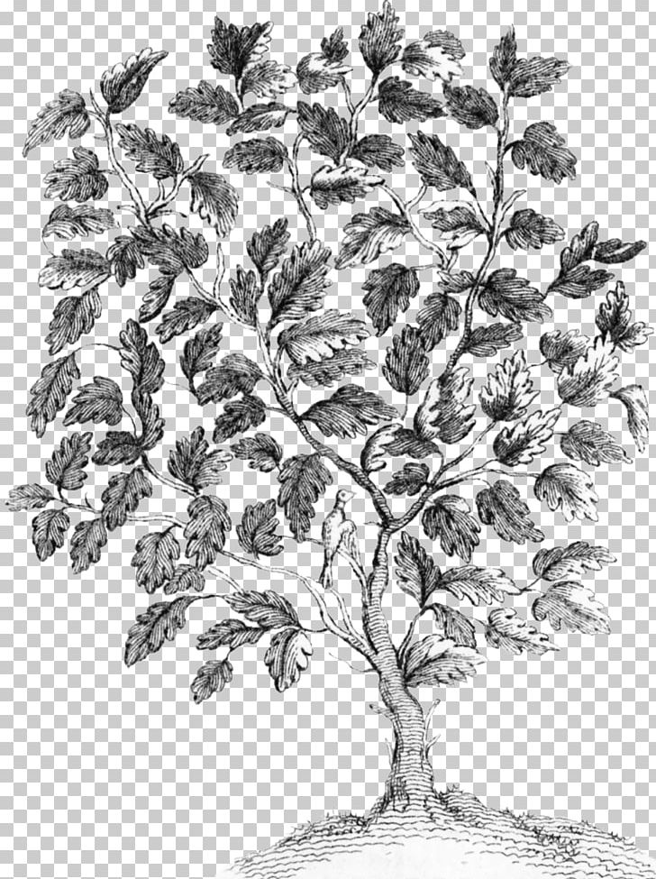 Twig Drawing Plant Stem Leaf /m/02csf PNG, Clipart, Black And White, Branch, Drawing, Fairy Tree, Flora Free PNG Download