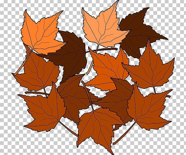 Autumn Leaf Color Maple Leaf PNG, Clipart, Animation, Autumn, Autumn Leaf Color, Branch, Brown Free PNG Download