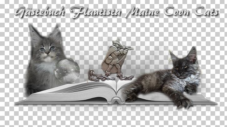 Whiskers Maine Coon Kitten Raccoon PNG, Clipart, Black And White, Carnivoran, Cat, Cat Like Mammal, Fauna Free PNG Download