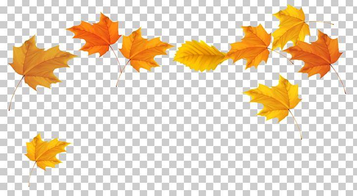 Autumn Leaf Color PNG, Clipart, Autumn, Autumn Leaf Color, Clipart, Clip Art, Color Free PNG Download