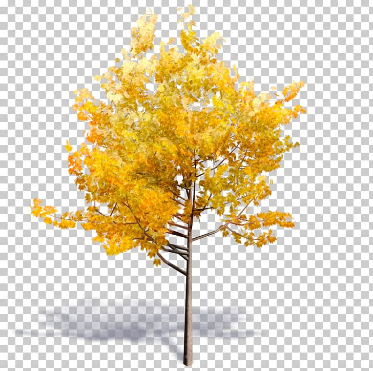 Tree Autodesk Revit Woody Plant Building Information Modeling PNG
