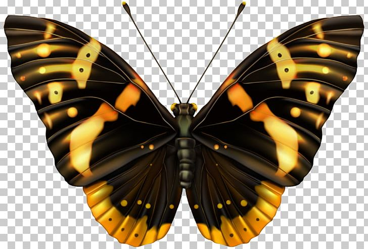 Butterfly PNG, Clipart, Arthropod, Black And Orange, Brown, Brush