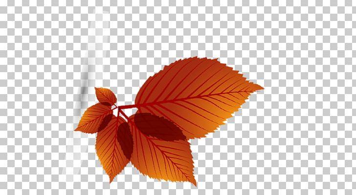 Maple Leaf Autumn PNG, Clipart, Autumn, Autumn Leaf, Chart, Deciduous, Element Free PNG Download