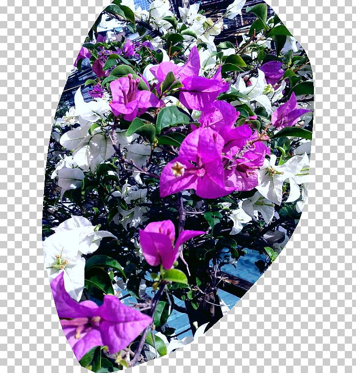 Cut Flowers Floral Design Rose Family Petal PNG, Clipart, Annual Plant, Bellflower Family, Bellflowers, Cut Flowers, Expect Free PNG Download
