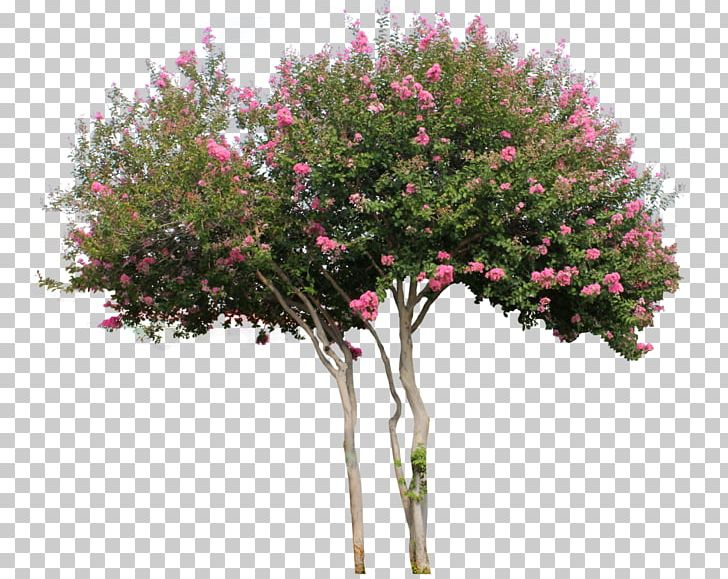 Woody Plant Tree Flower Shrub PNG, Clipart, Blossom, Branch, Cut Flowers, Flora, Flower Free PNG Download