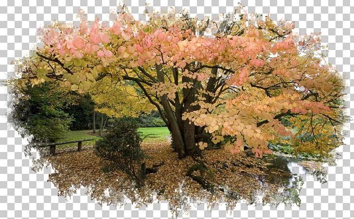 Desktop Autumn Leaf Color Oak Tree PNG, Clipart, 1080p, Autumn, Autumn Hd, Autumn Leaf Color, Branch Free PNG Download