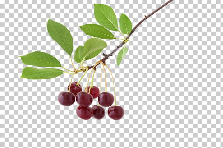 Chokeberry Tree Nut Allergy Gluten-free Diet Paleolithic Diet PNG, Clipart, Allergen, Allergy, Berry, Branch, Cherry Free PNG Download