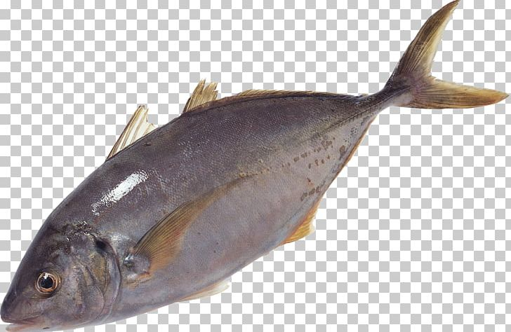 Milkfish Salmon Oily Fish Sole Fish Products PNG, Clipart, Animal, Animals, Animal Source Foods, Bonito, Bony Fish Free PNG Download